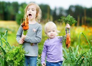 Children picking carrots