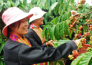 coffee-workers-vietnam1