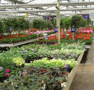 bedding plants aylett nurseries visit ayletts garden. Black Bedroom Furniture Sets. Home Design Ideas