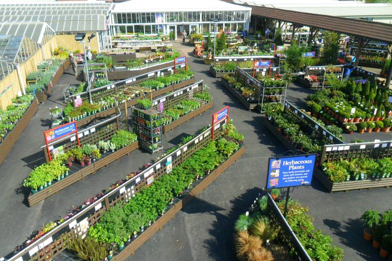 Garden shrubs and plants for sale and on display at the Aylett Nurseries St Albans garden centre