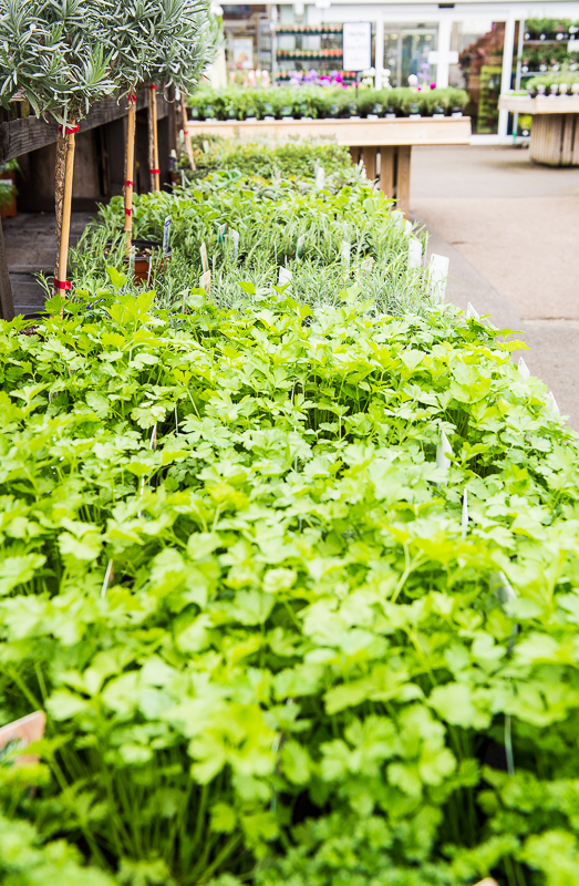 Herbs lined up at a garden centre