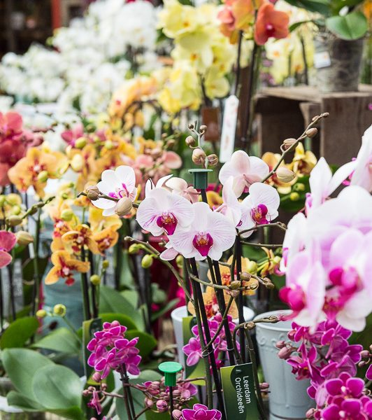 Mixed orchids