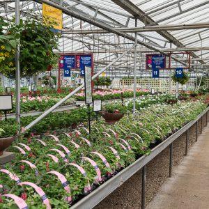 Seasonal Plant greenhouse