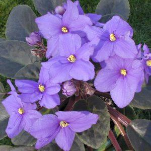 Purple bathroom plant