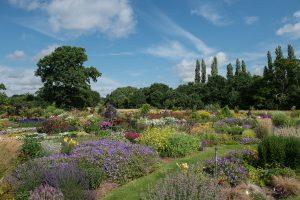 Aylett's celebration garden