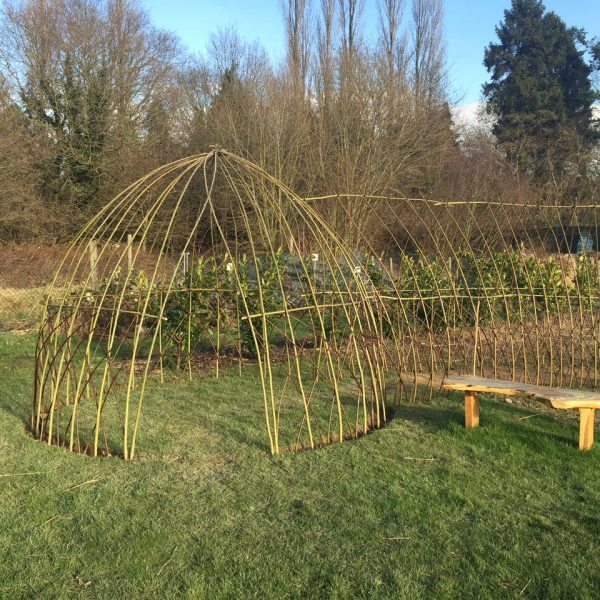 Living Willow Dome & Tunnel - January 2018 just planted