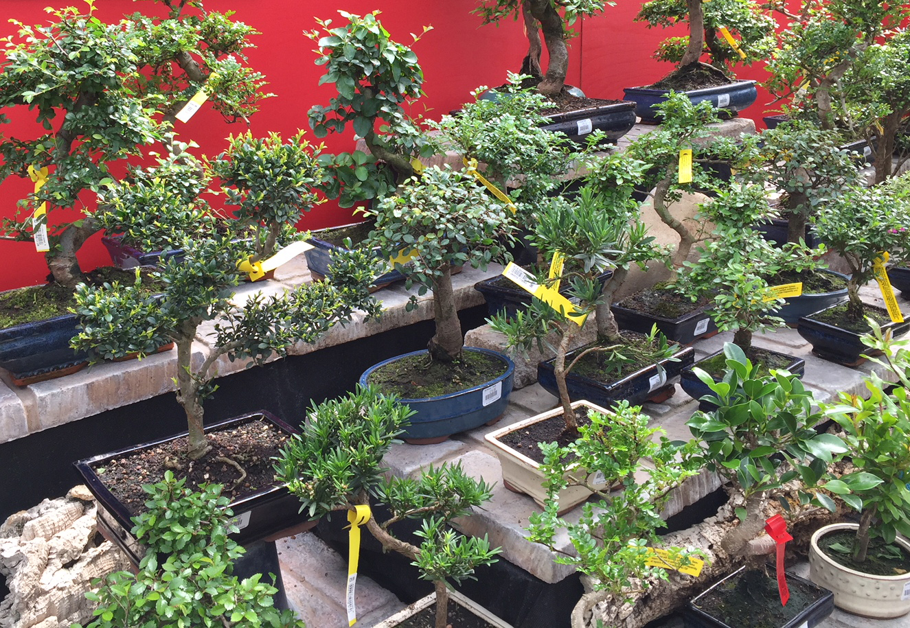 Indoor Bonsai Trees - Aylett Nurseries - Visit Ayletts