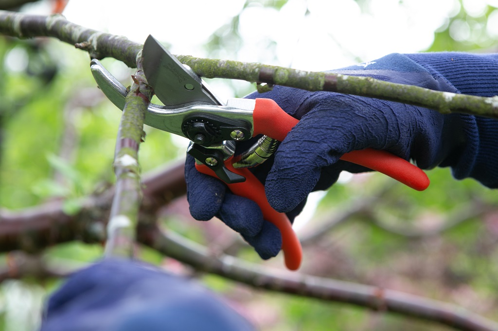 Tools for Pruning & Cutting